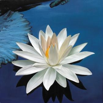 """White Lotus on Blue Water"" uAsed with permission from Artist Paul Heussenstamm http://www.mandalas.com/mandala/htdocs/FlowerGallery/WhiteLotusonBlueWater.php"